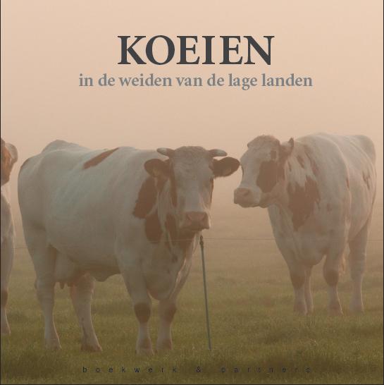 Koeien in de weiden van de lage landen